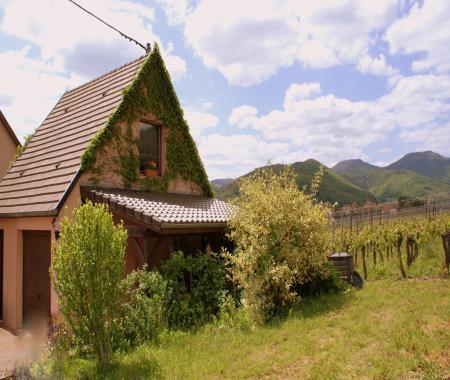 Le Vogelgarten A 3kms De Kaysersberg 10kms De A Sigolsheim