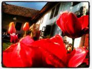 Location gîte, chambres d'hotes La Fontaine Aux Merveilles dans le département Ain 1