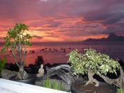 Location gîte, chambres d'hotes Balcon du Lotus vue imprenable sur le lagon et sur l'île de Moorea dans le département Polynésie Française 987