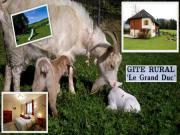 Location gîte, chambres d'hotes Gîte Le Grand Duc dans le département Isère 38