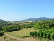Location gîte, chambres d'hotes Gite au pied des vignes avec vue sur le Mont Ste Odile dans le département Bas Rhin 67